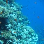 Туры на Красное море
